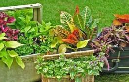 Bài trí tiểu cảnh sân vườn đẹp giúp giải nhiệt cho mùa hè