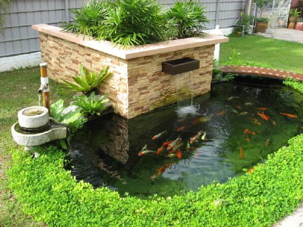 Thiết kế hồ Koi sẽ làm cho nhà bạn sang trọng và hiện đại hơn