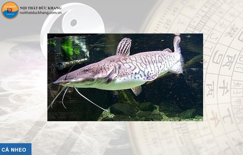 Cá Nheo hợp phong thủy mệnh Mộc