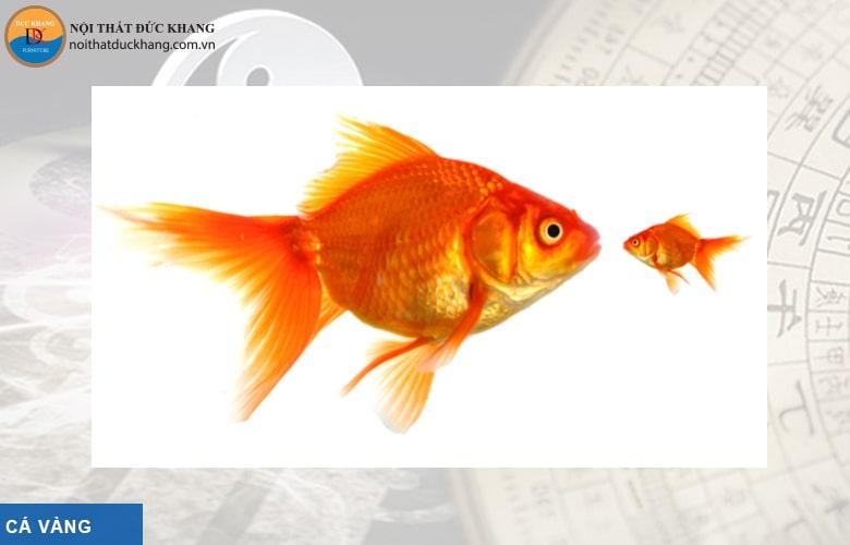 Cá vàng hợp phong thủy mệnh Mộc